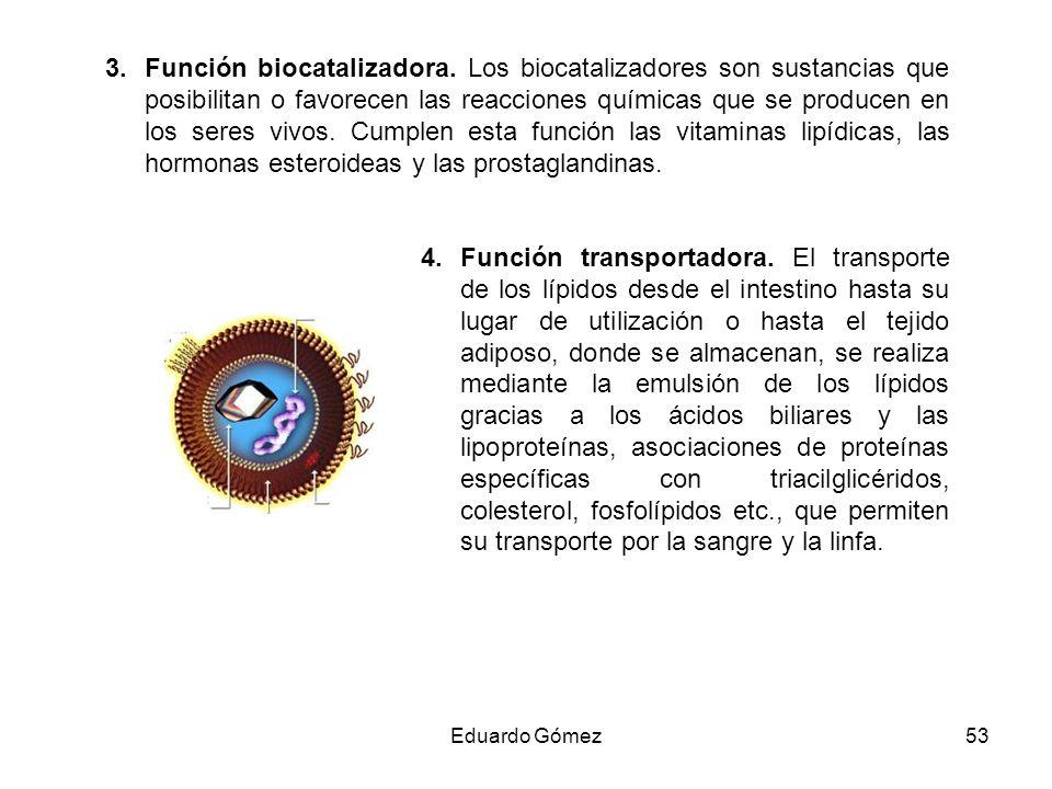 Función biocatalizadora