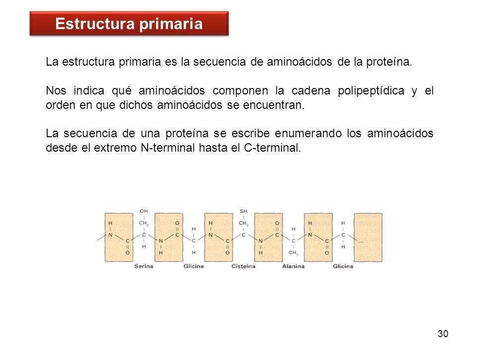 Estructura primariaLa estructura primaria es la secuencia de aminoácidos de la proteína.