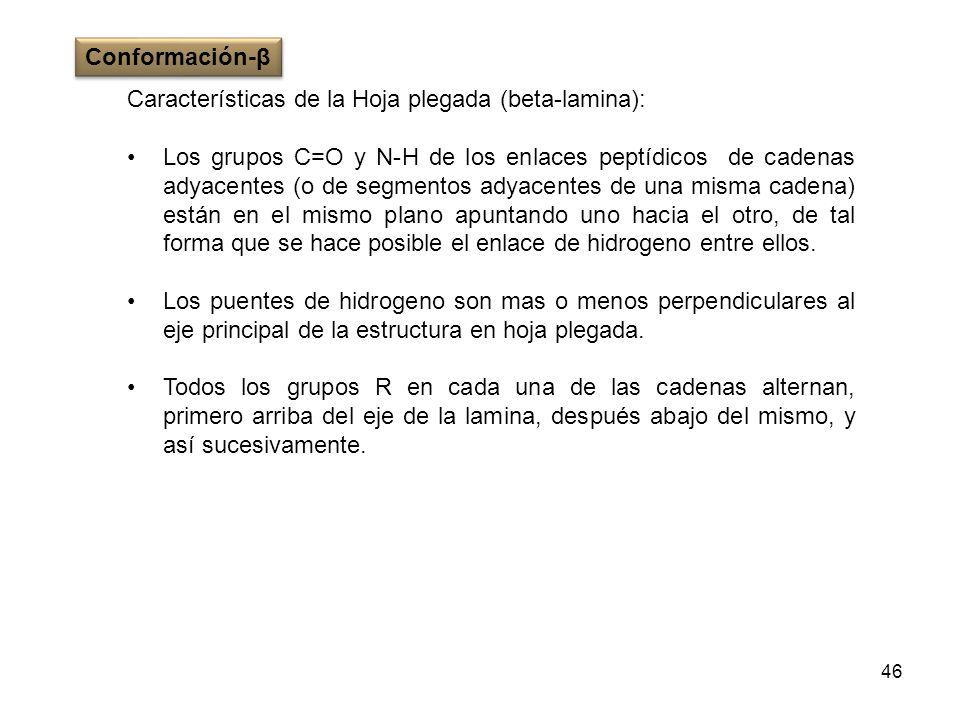 Conformación-βCaracterísticas de la Hoja plegada (beta-lamina):