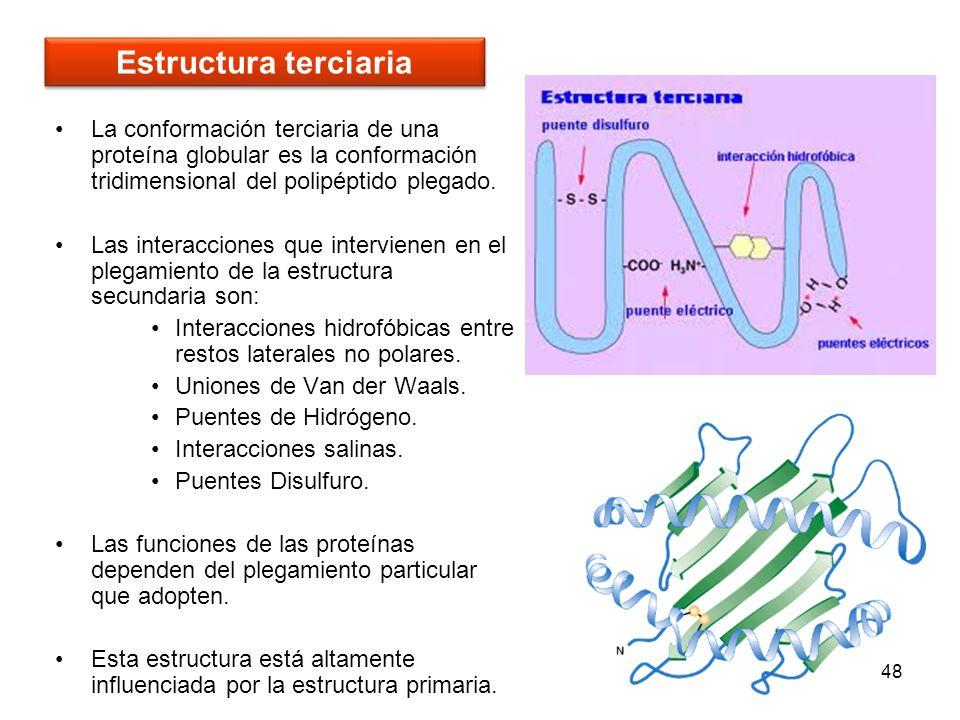Estructura terciariaLa conformación terciaria de una proteína globular es la conformación tridimensional del polipéptido plegado.