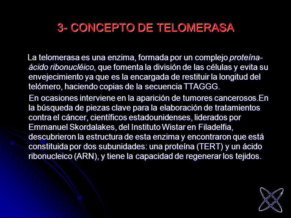 3- CONCEPTO DE TELOMERASA