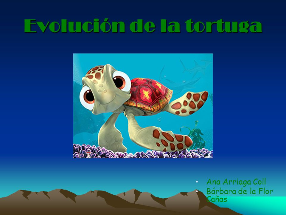 Evolución de la tortuga