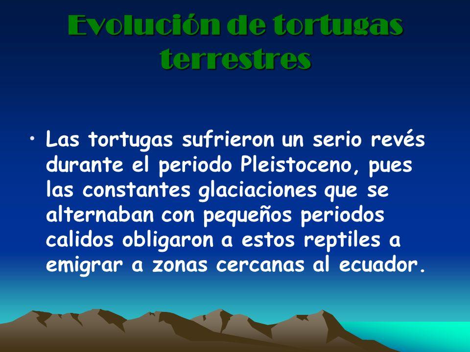 Evolución de tortugas terrestres