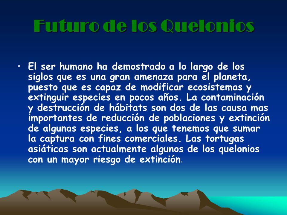 Futuro de los Quelonios