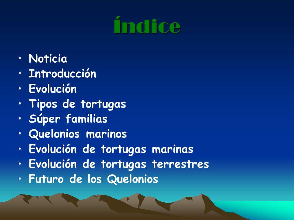 Índice Noticia Introducción Evolución Tipos de tortugas Súper familias