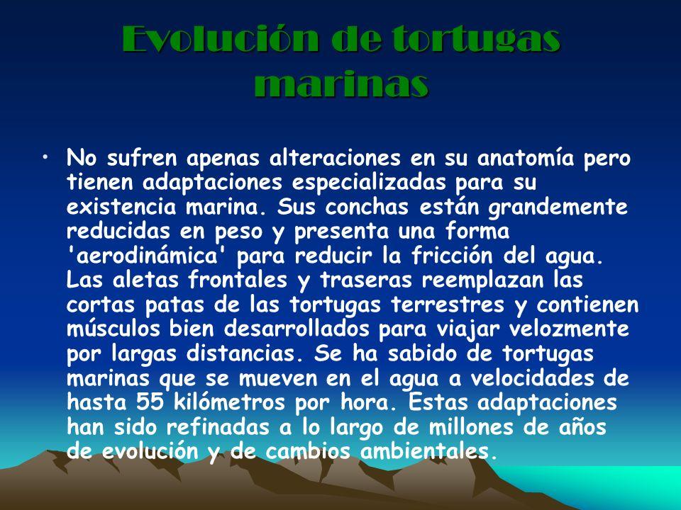 Evolución de tortugas marinas