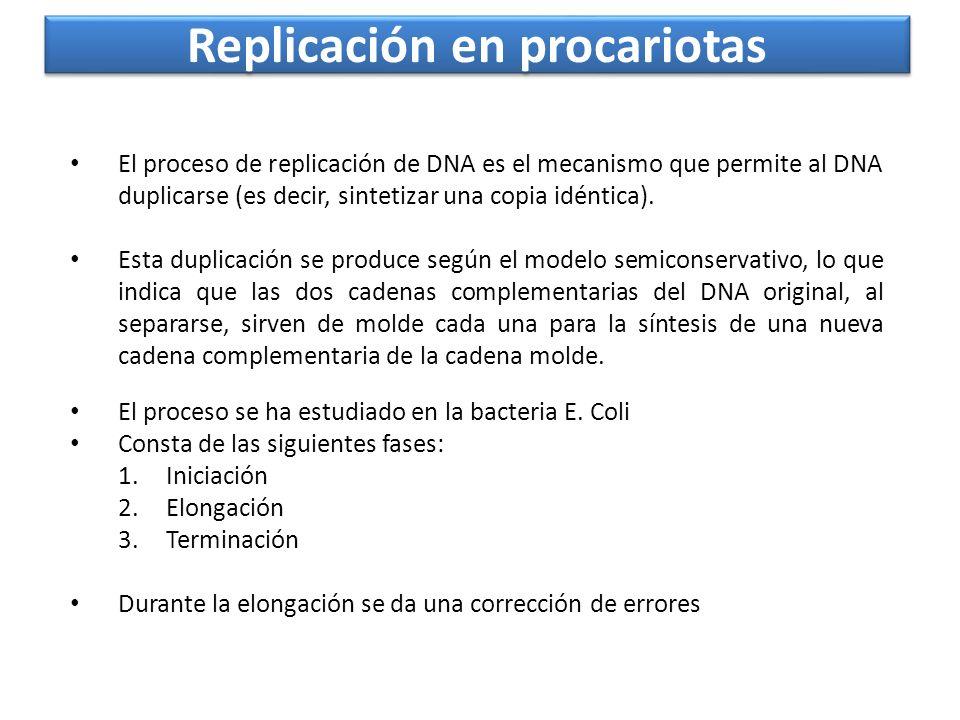 Replicación en procariotas