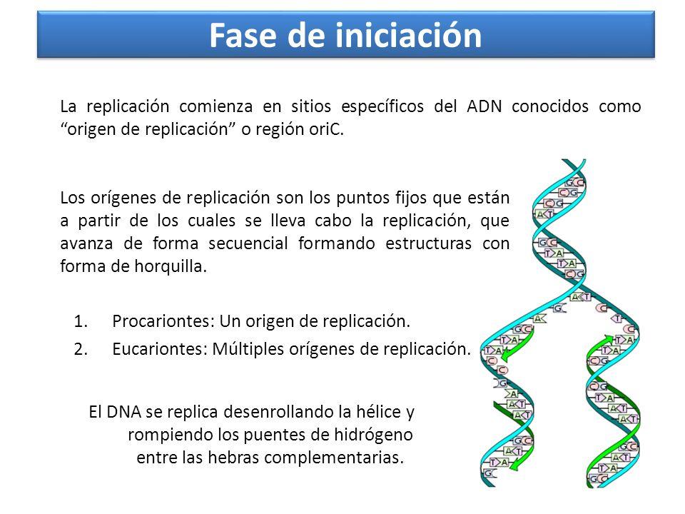 Fase de iniciaciónLa replicación comienza en sitios específicos del ADN conocidos como origen de replicación o región oriC.