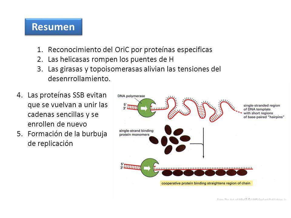 Resumen Reconocimiento del OriC por proteínas especificas