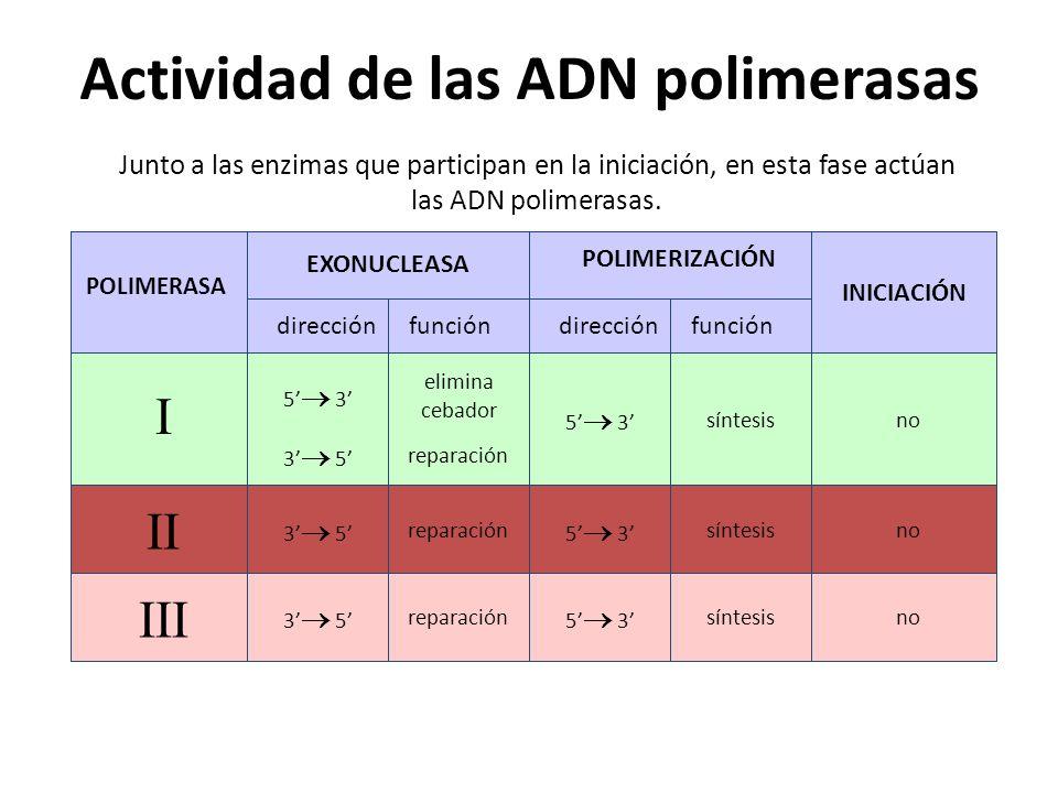 Actividad de las ADN polimerasas