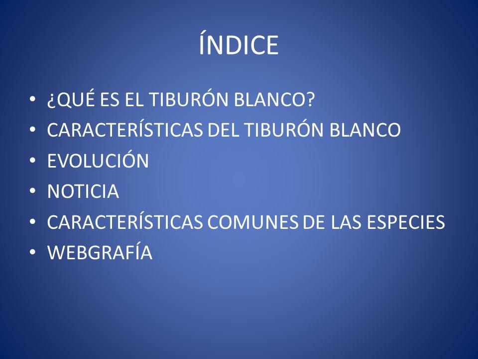 ÍNDICE ¿QUÉ ES EL TIBURÓN BLANCO CARACTERÍSTICAS DEL TIBURÓN BLANCO