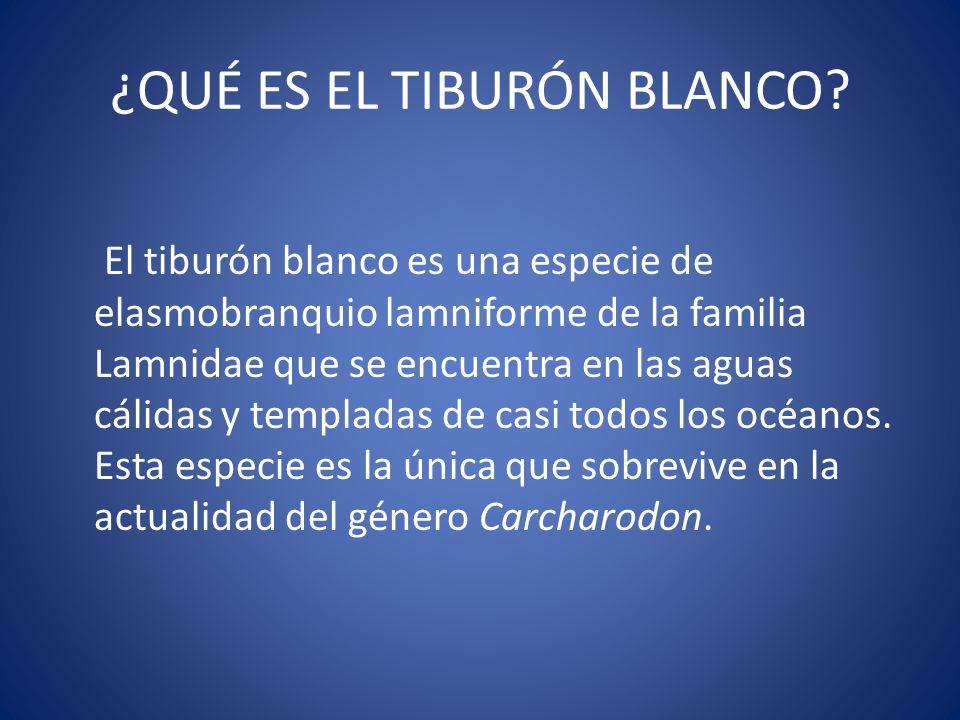 ¿QUÉ ES EL TIBURÓN BLANCO