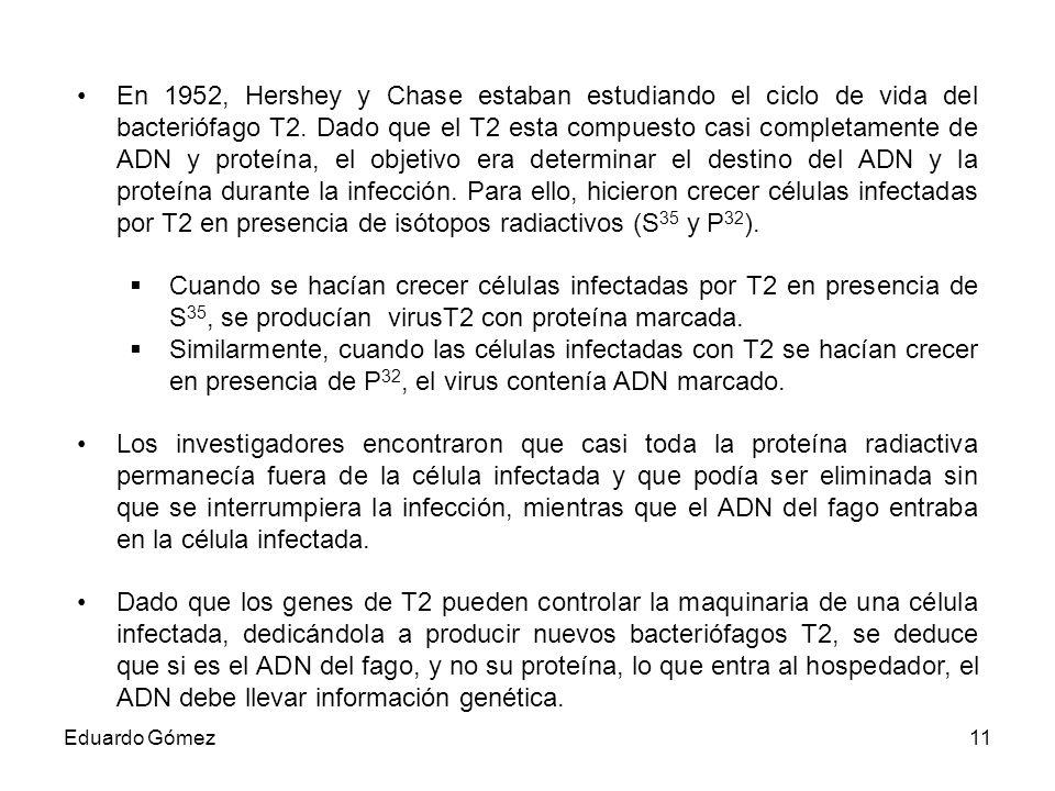 En 1952, Hershey y Chase estaban estudiando el ciclo de vida del bacteriófago T2. Dado que el T2 esta compuesto casi completamente de ADN y proteína, el objetivo era determinar el destino del ADN y la proteína durante la infección. Para ello, hicieron crecer células infectadas por T2 en presencia de isótopos radiactivos (S35 y P32).