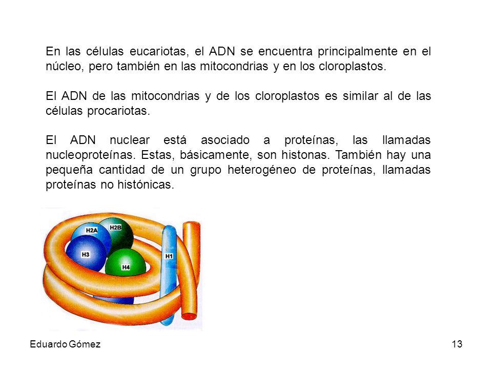 En las células eucariotas, el ADN se encuentra principalmente en el núcleo, pero también en las mitocondrias y en los cloroplastos.