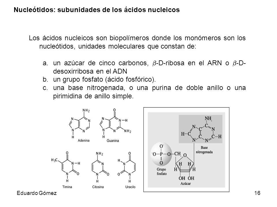 Nucleótidos: subunidades de los ácidos nucleicos