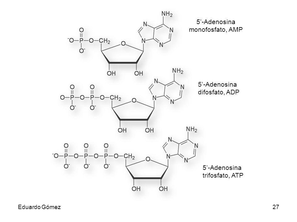 5'-Adenosina monofosfato, AMP 5'-Adenosina difosfato, ADP 5'-Adenosina