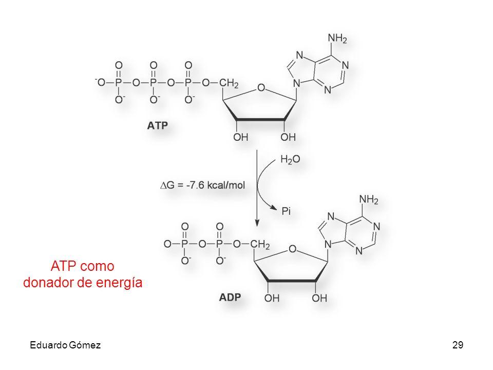 ATP como donador de energía Eduardo Gómez