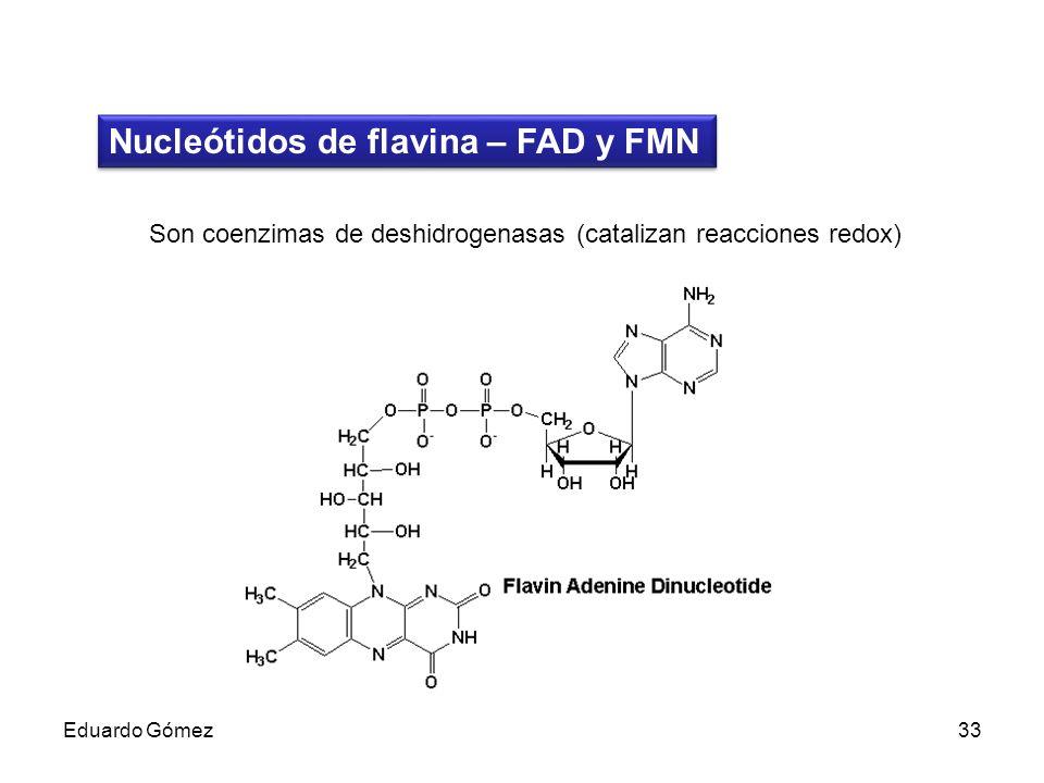 Nucleótidos de flavina – FAD y FMN