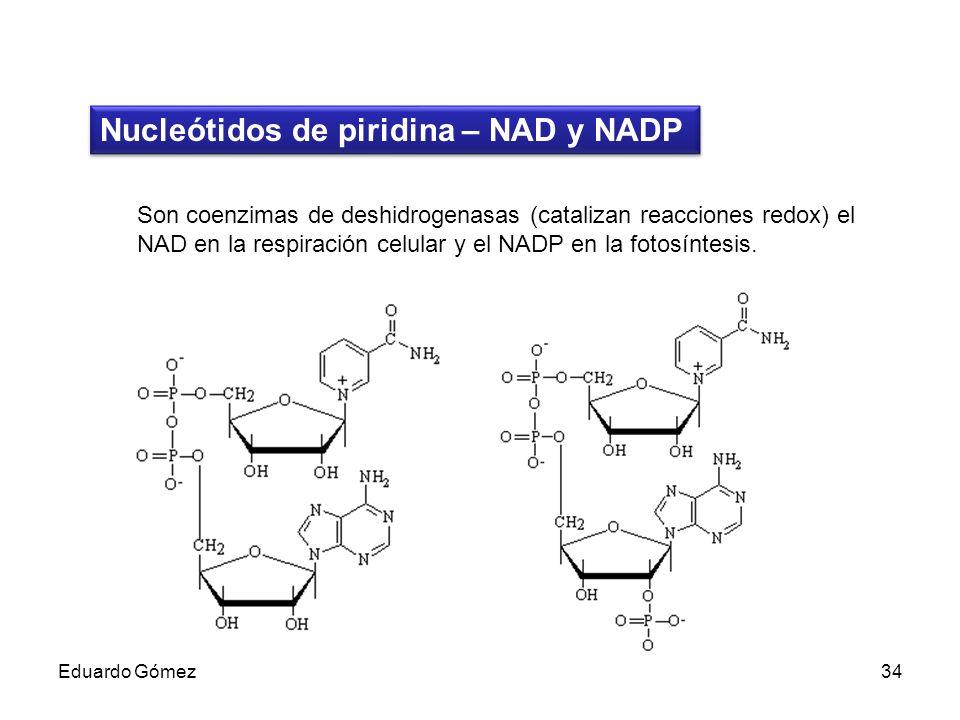 Nucleótidos de piridina – NAD y NADP