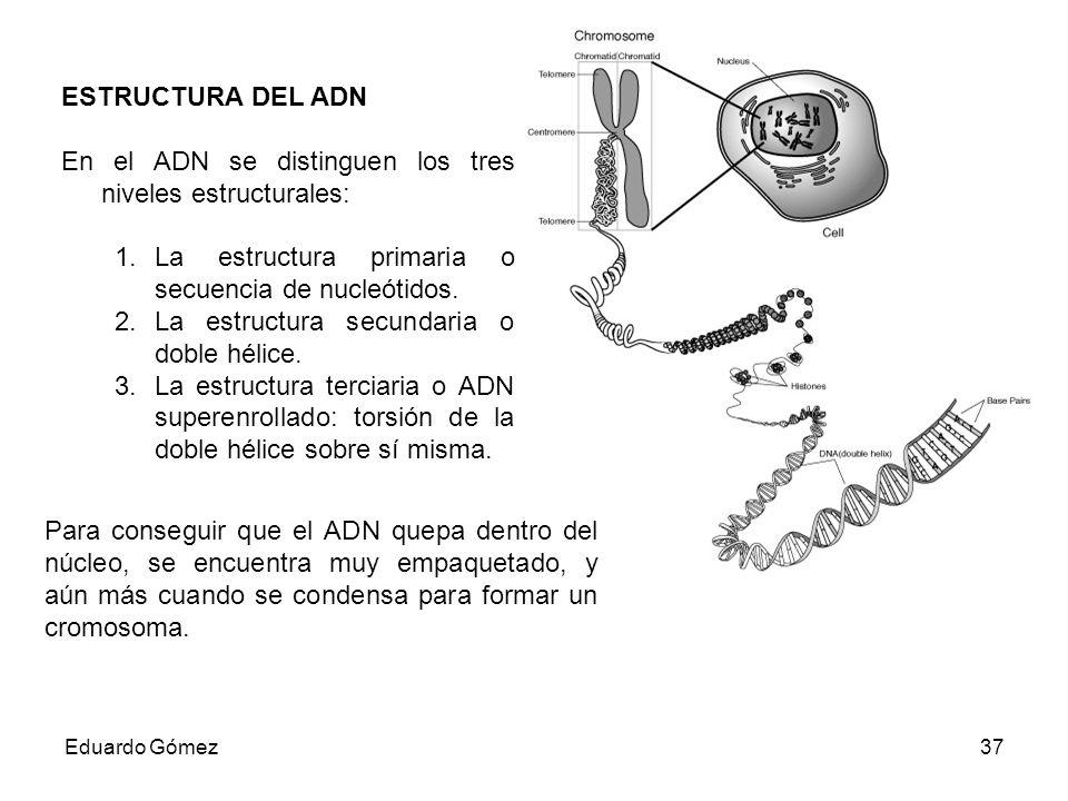 En el ADN se distinguen los tres niveles estructurales: