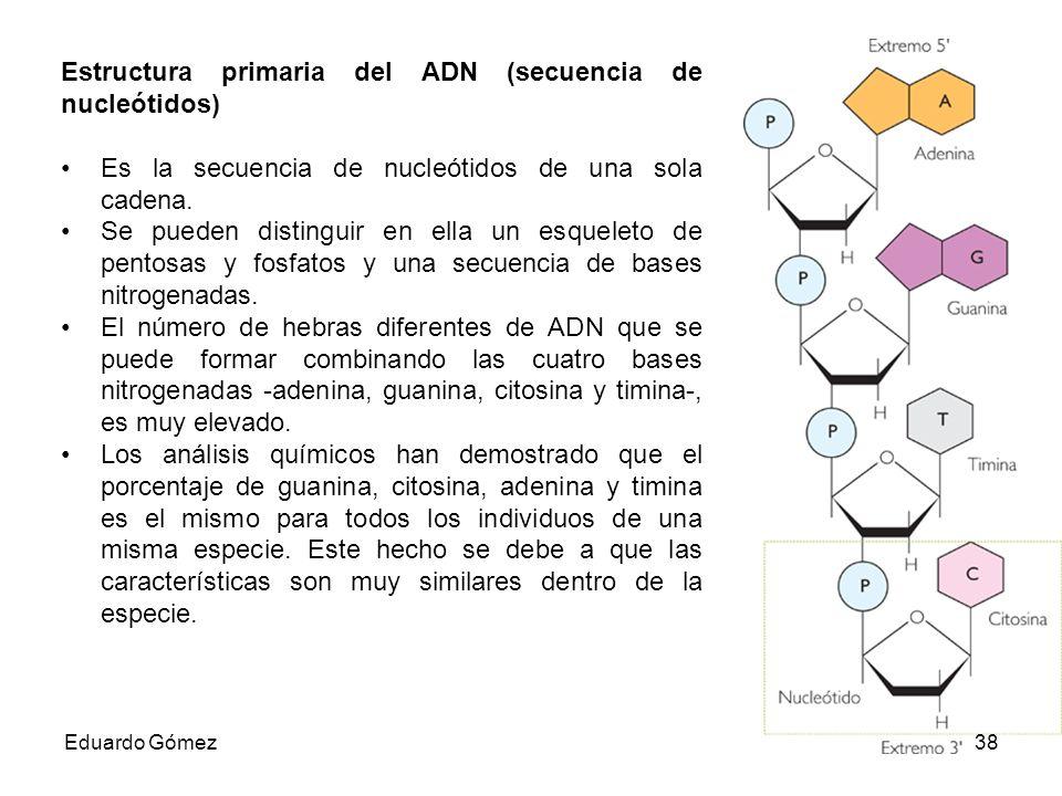 Estructura primaria del ADN (secuencia de nucleótidos)