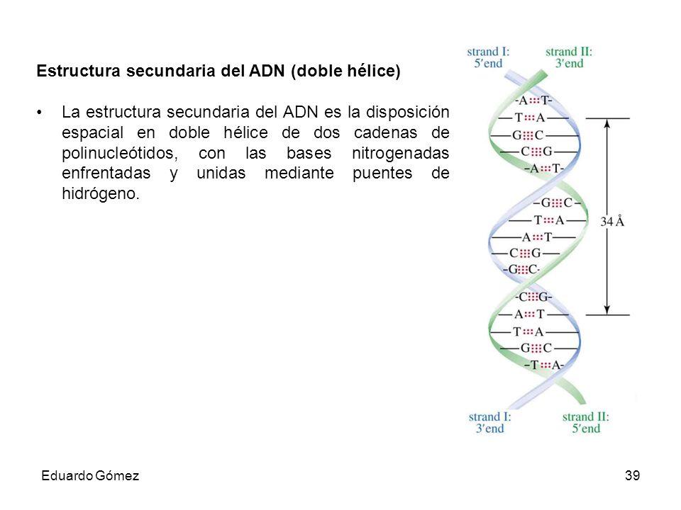 Estructura secundaria del ADN (doble hélice)