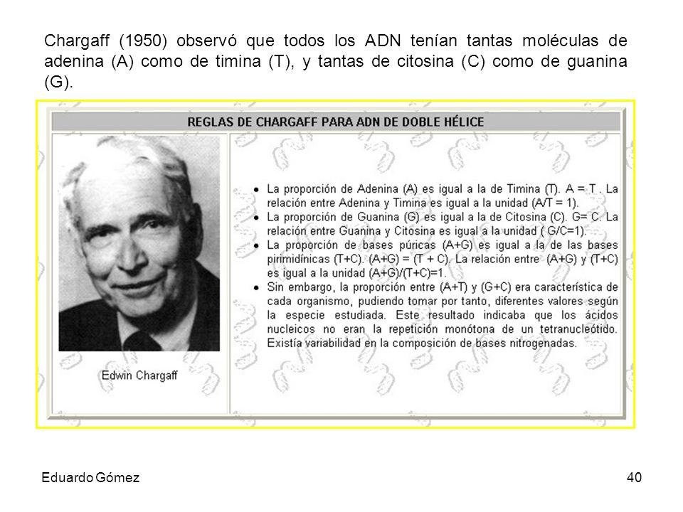 Chargaff (1950) observó que todos los ADN tenían tantas moléculas de adenina (A) como de timina (T), y tantas de citosina (C) como de guanina (G).