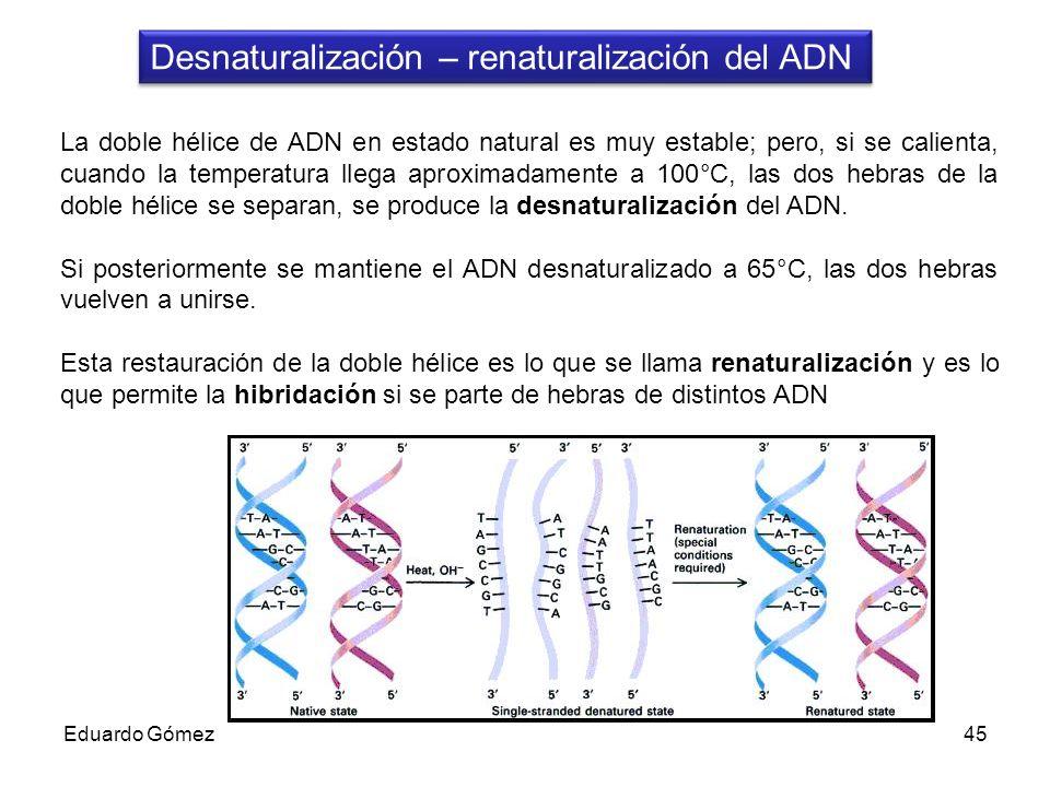 Desnaturalización – renaturalización del ADN