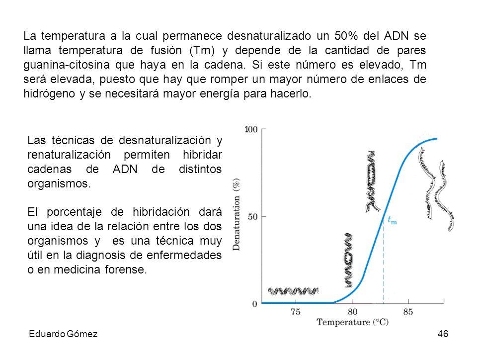 La temperatura a la cual permanece desnaturalizado un 50% del ADN se llama temperatura de fusión (Tm) y depende de la cantidad de pares guanina-citosina que haya en la cadena. Si este número es elevado, Tm será elevada, puesto que hay que romper un mayor número de enlaces de hidrógeno y se necesitará mayor energía para hacerlo.