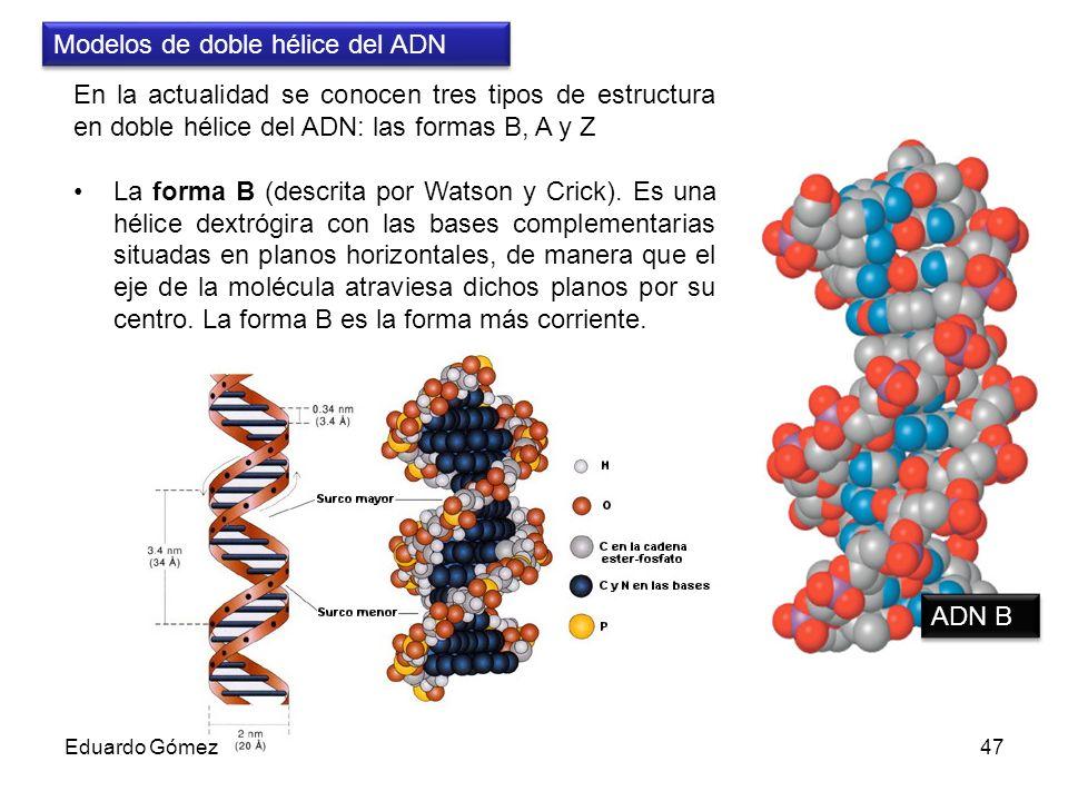 Modelos de doble hélice del ADN