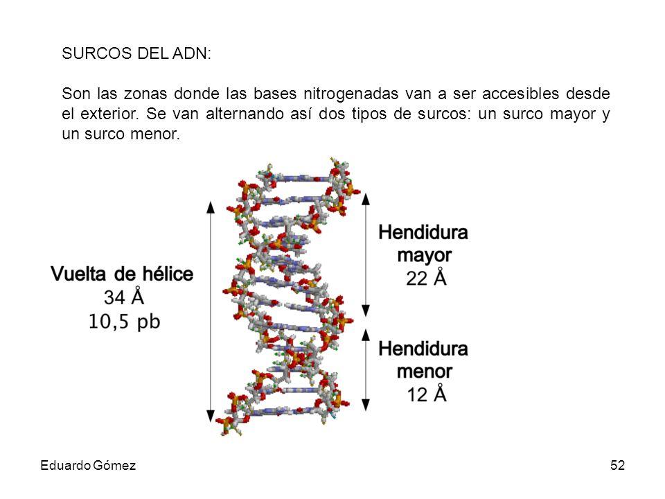 SURCOS DEL ADN: