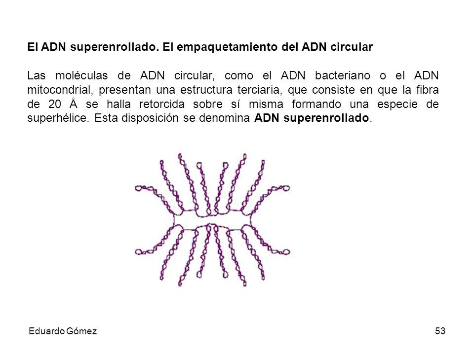 El ADN superenrollado. El empaquetamiento del ADN circular