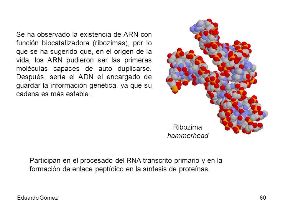 Se ha observado la existencia de ARN con función biocatalizadora (ribozimas), por lo que se ha sugerido que, en el origen de la vida, los ARN pudieron ser las primeras moléculas capaces de auto duplicarse. Después, sería el ADN el encargado de guardar la información genética, ya que su cadena es más estable.