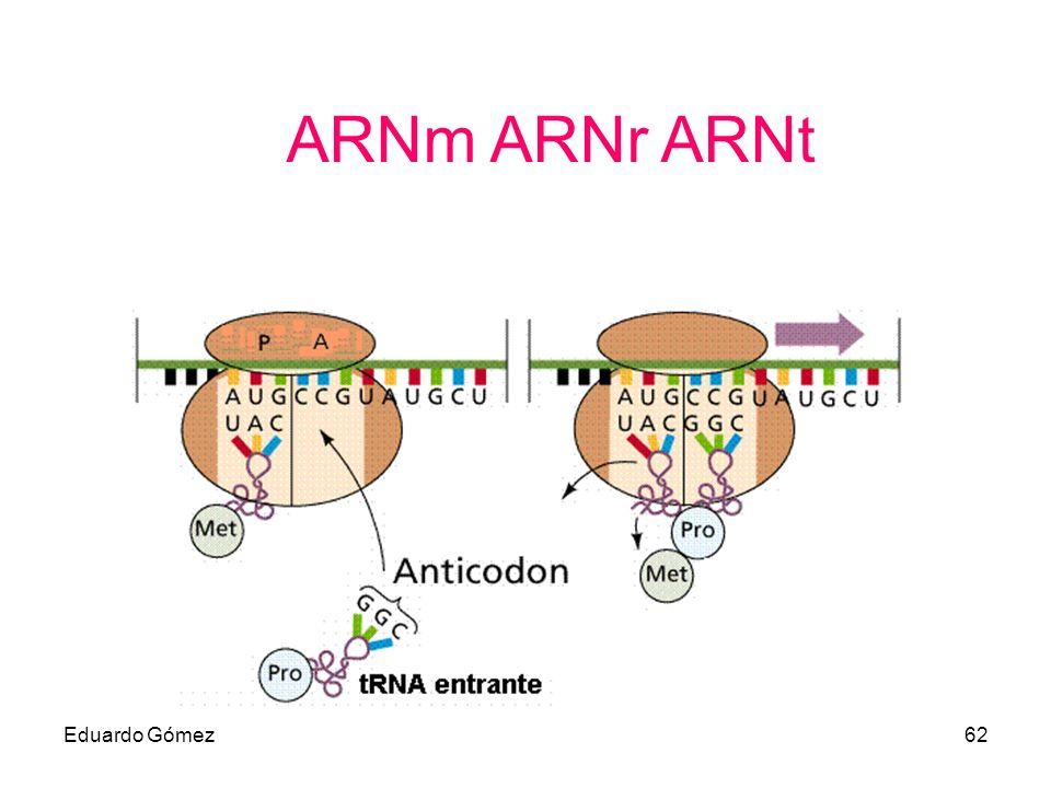 ARNm ARNr ARNt Eduardo Gómez