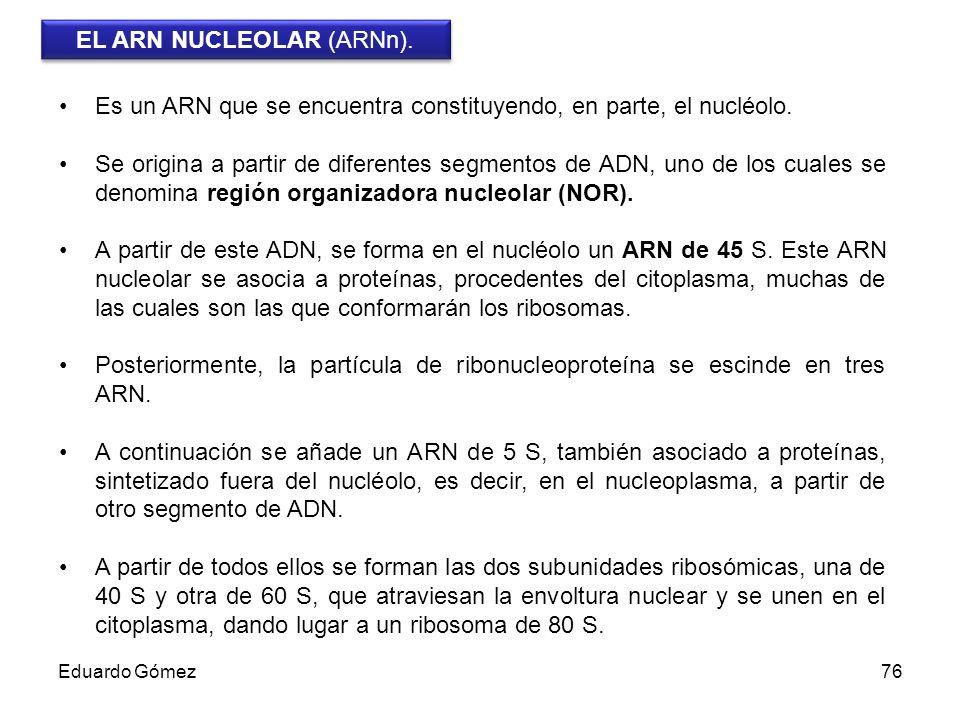 EL ARN NUCLEOLAR (ARNn).