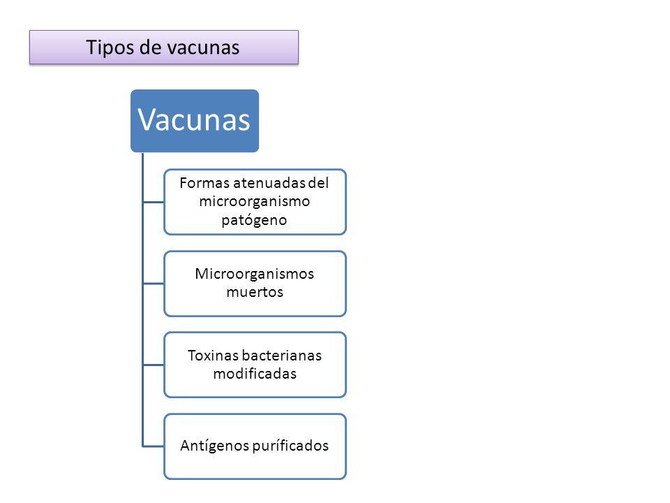 Tipos de vacunas Vacunas Formas atenuadas del microorganismo patógeno