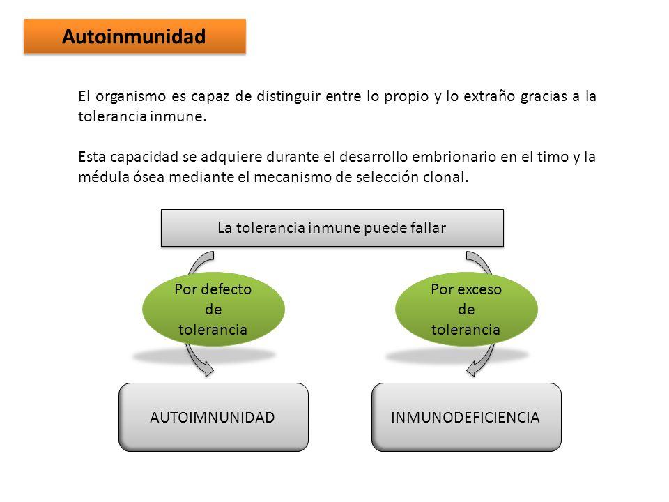 AutoinmunidadEl organismo es capaz de distinguir entre lo propio y lo extraño gracias a la tolerancia inmune.
