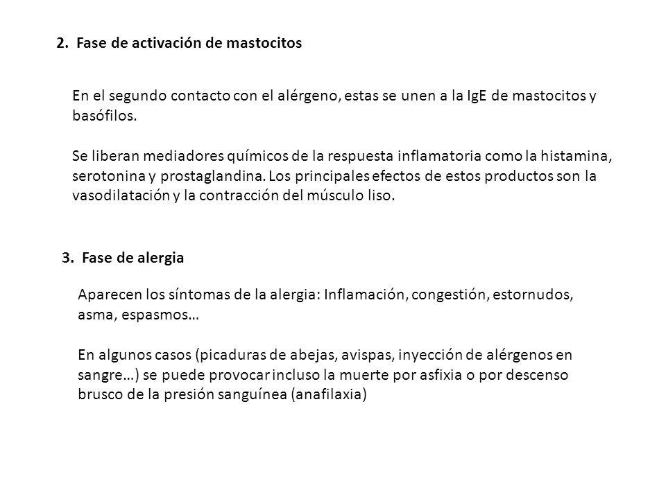 2. Fase de activación de mastocitos