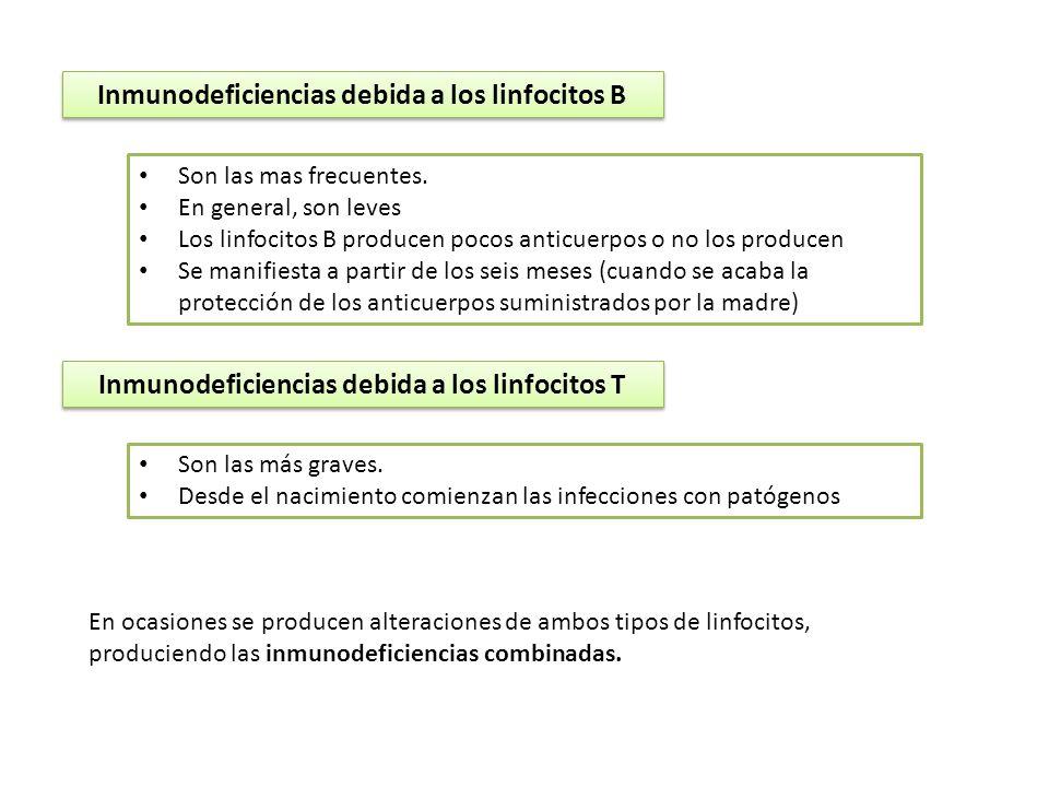 Inmunodeficiencias debida a los linfocitos B