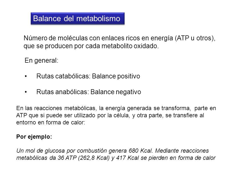 Balance del metabolismo