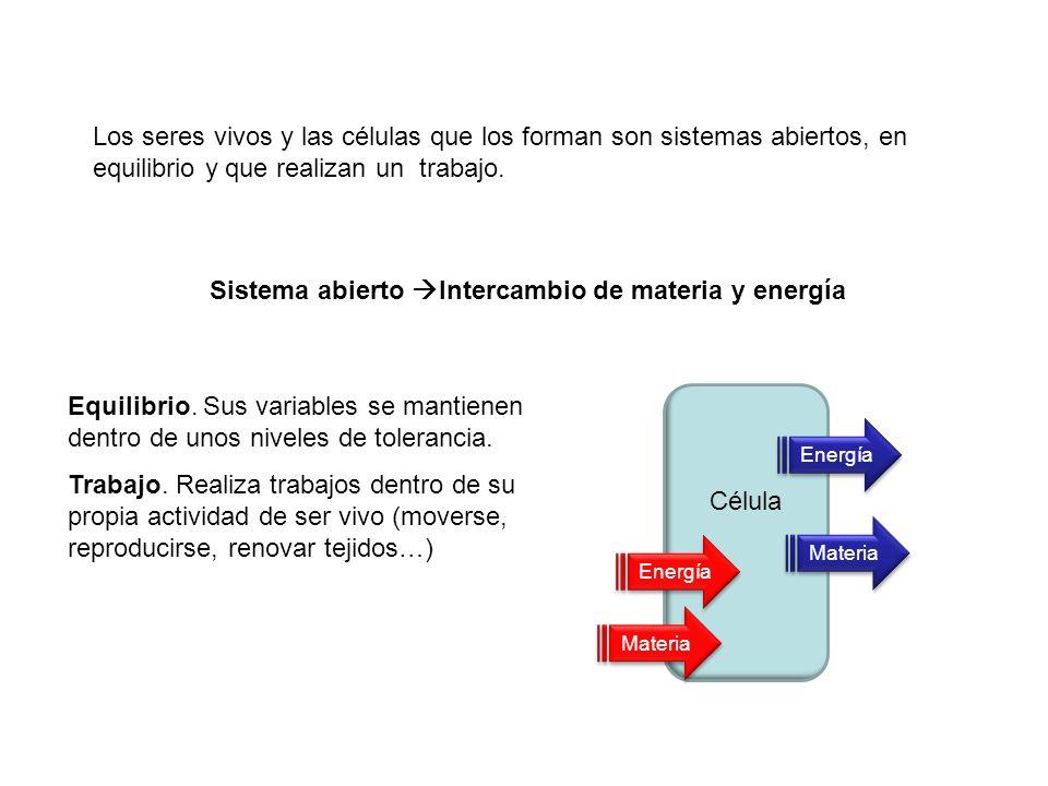 Sistema abierto Intercambio de materia y energía