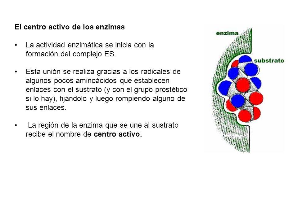 El centro activo de los enzimas