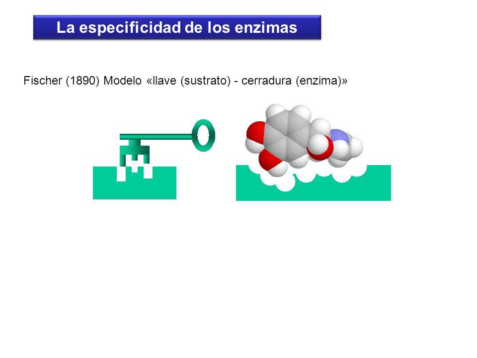 La especificidad de los enzimas