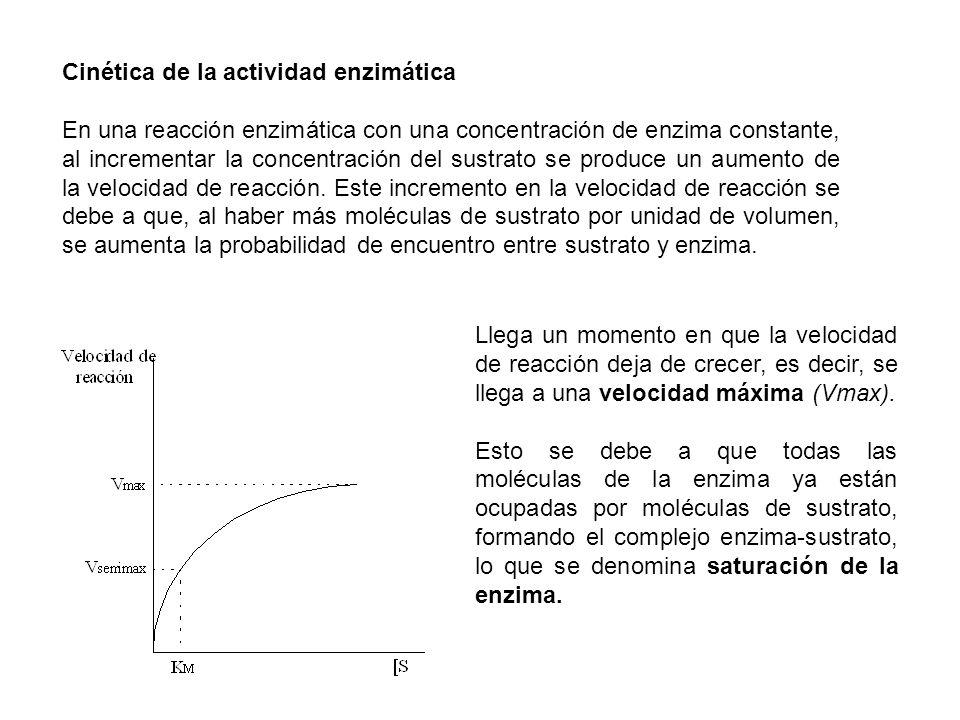 Cinética de la actividad enzimática