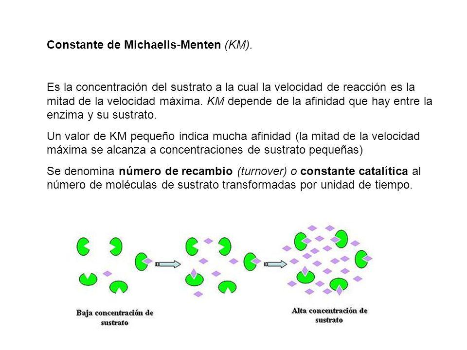 Constante de Michaelis-Menten (KM).