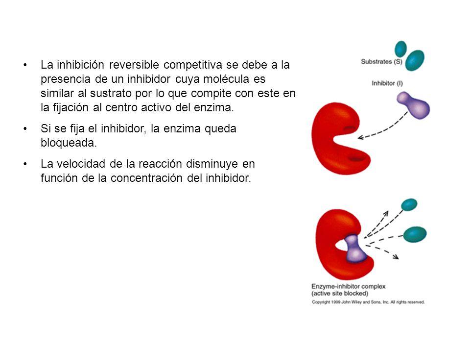 La inhibición reversible competitiva se debe a la presencia de un inhibidor cuya molécula es similar al sustrato por lo que compite con este en la fijación al centro activo del enzima.