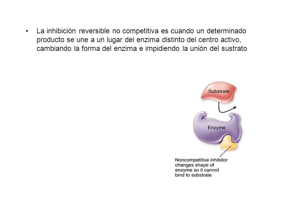 La inhibición reversible no competitiva es cuando un determinado producto se une a un lugar del enzima distinto del centro activo, cambiando la forma del enzima e impidiendo la unión del sustrato