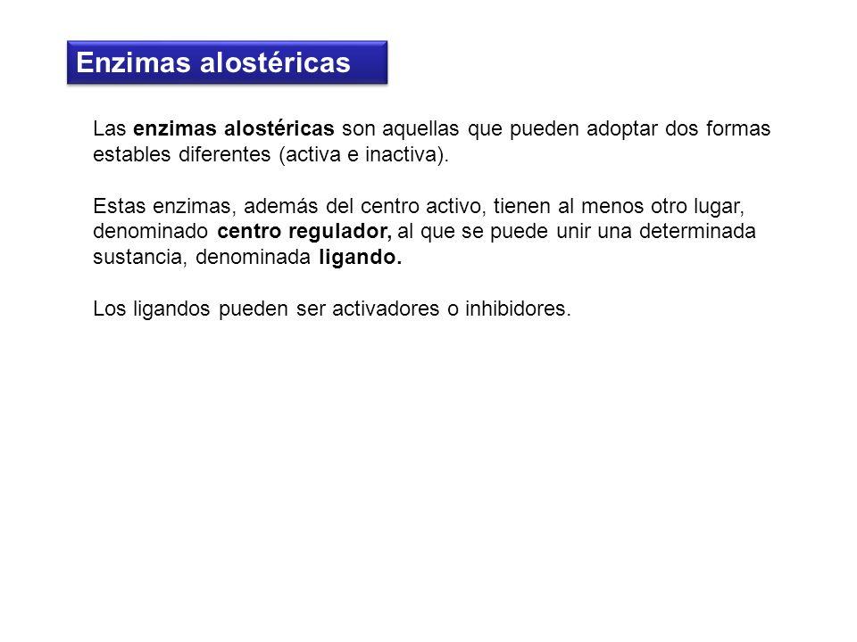 Enzimas alostéricas Las enzimas alostéricas son aquellas que pueden adoptar dos formas estables diferentes (activa e inactiva).