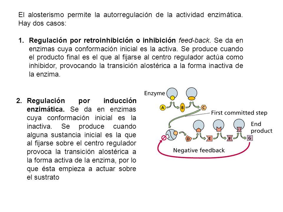 El alosterismo permite la autorregulación de la actividad enzimática