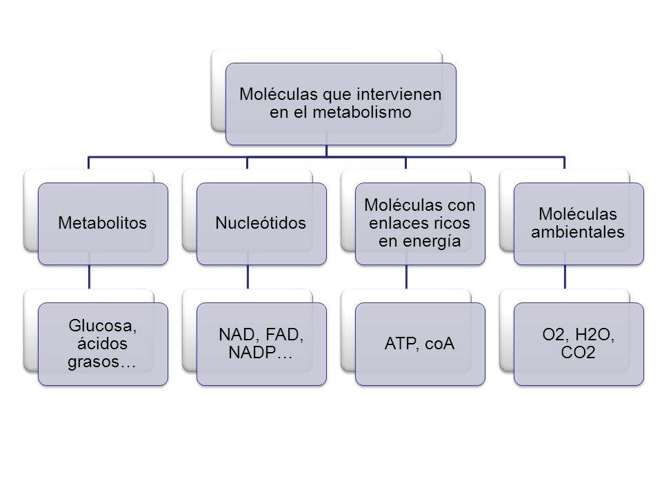 Moléculas que intervienen en el metabolismo Metabolitos